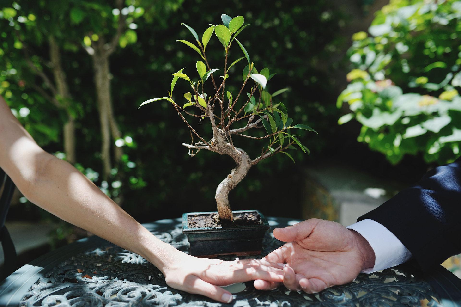 sprüche zur hochzeit baum pflanzen